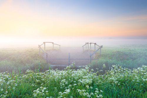 Op een koele ochtend in mei komt langzaam de zon op in het oosten boven het Nationaal Park Lauwersoo