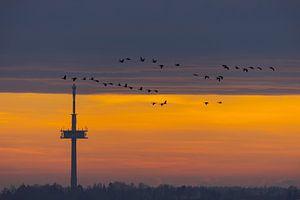 Fernsehturm bei Regensburg bei Sonnenaufgang mit einem Schwarm Vögel