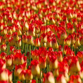 Tulpen in rood en geel van Dirk Jan Kralt