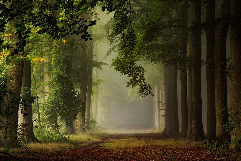 Welcoming Autumn. van Inge Bovens