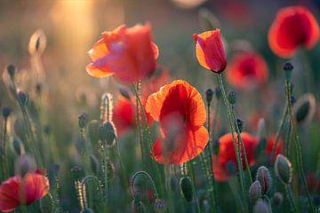 Mohnblumen im Licht der untergehenden Sonne #2 von Edwin Mooijaart