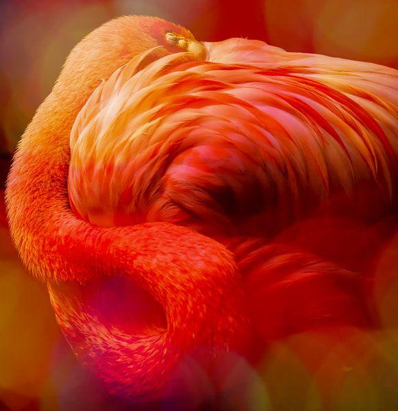 Flamingo, Asleep sur Marja van den Hurk