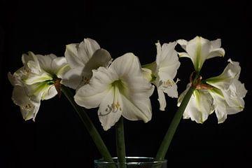 Amaryliss-Bouquet vor schwarzem Hintergrund von Atelier Liesjes
