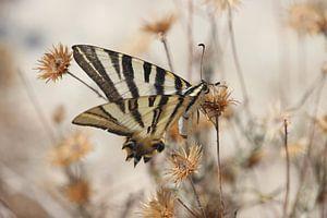 Vlinder tussen de bloemen van