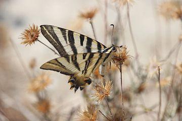 Vlinder tussen de bloemen von Maartje de Roij