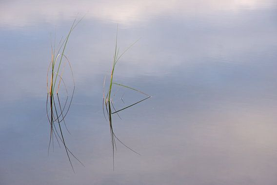 Schotse grasjes van Miranda Bos