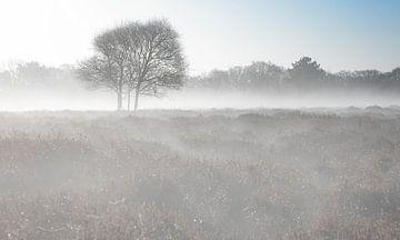 Boom in de Mist. van Justin Sinner Pictures ( Fotograaf op Texel)