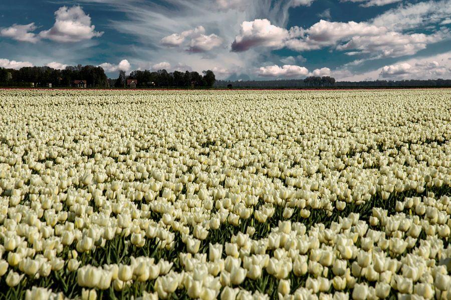Tulpenveld in de Flevopolder van Gert Hilbink