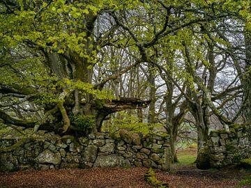 Der Torwächter im Widdon Wood, Großbritannien von Lars van de Goor