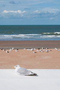 Meeuw op het strand in Westende