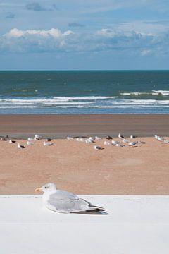 Seagull at the beach in Westende - Belgium von Tamara Witjes