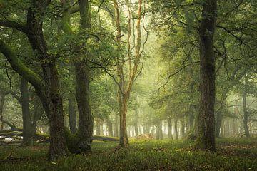 Das Geheimnis der Bäume von Jeroen Lagerwerf