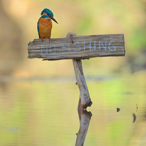 No fishing!