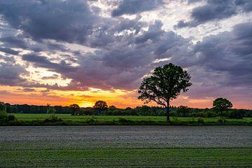Sonnenaufgang über einer grünen Landschaft mit orangefarbenem Himmel und Wolken von Dafne Vos
