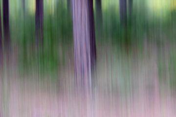 purple haze van Bernd Hoyen