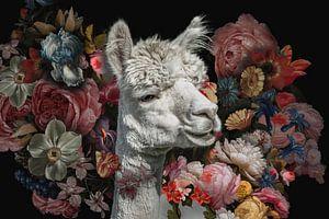 Alpaka unter alten Blumen