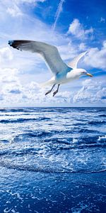 Seagull and Nothern Sea