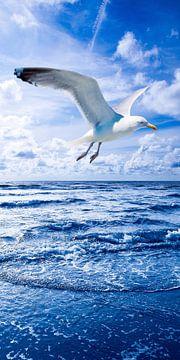 Seagull and Nothern Sea van Jörg Hausmann