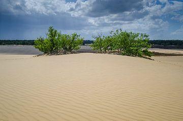 Bomen in de duinen van Mark Bolijn
