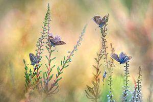 Vlinderfantasie