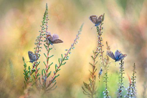Vlinderfantasie van