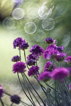 Blume XVI von