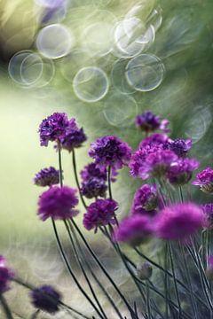 Blume XVI van