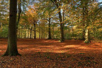 Herfst bos met open structuur van FotoBob