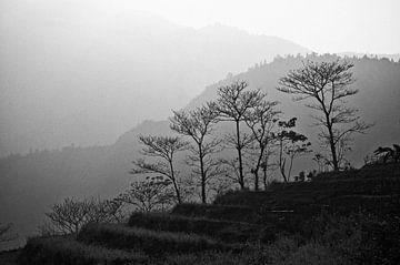 Bäume in den Bergen von Sapa | Vietnam von Photolovers reisfotografie