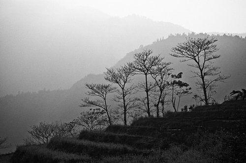 Bomen in de bergen van Sapa | Vietnam