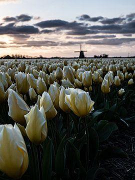 Tulpen van Holland van Larissa Geuke