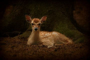 Bambi sur Heike Hultsch