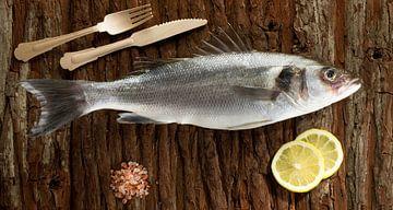 Vis van Nancy Bogaert