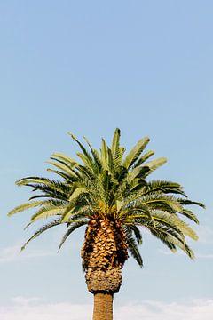 Palmboom | USA | Reisfotografie | Summertime van Mirjam Broekhof