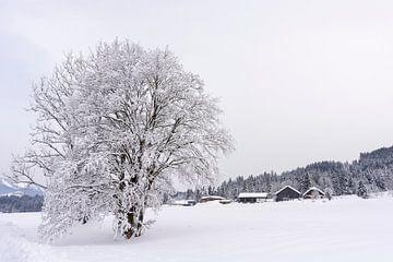 Baum voller Schnee von Barbara Brolsma