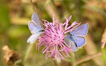 blauwe vlinders van Leon Huurman