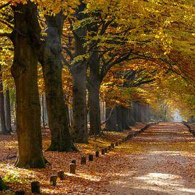 Herfst in het Spanderswoud bij Hilversum sur Martin Stevens