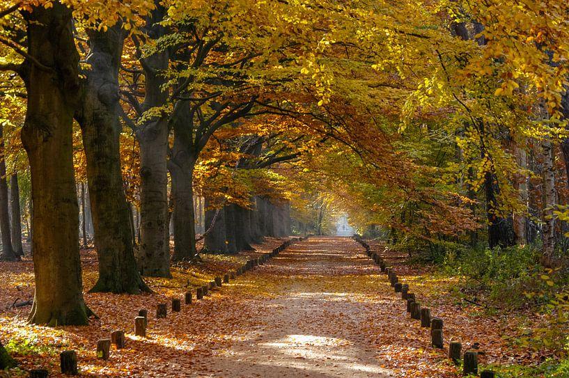 Herfst in het Spanderswoud bij Hilversum van Martin Stevens