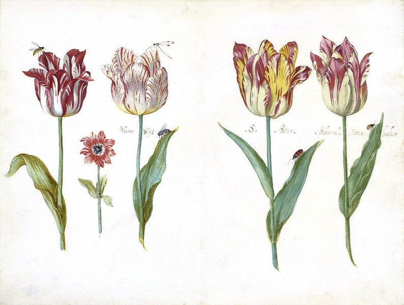 Blatt aus einem Tulpenbuch, Jacob Marrel von Het Archief