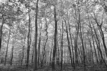 Abstrakter Schwarz-Weiß-Druck von Bäumen im Wald bei Gortel. von Christa Stroo fotografie