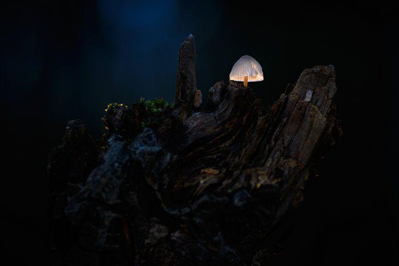 Paddenstoelwereldje van Andy van der Steen - Fotografie