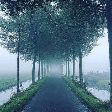 Mist & Bomen van Niels Krommenhoek