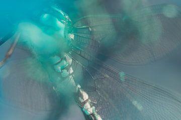 The Bubble – Libelle von anouk drenth
