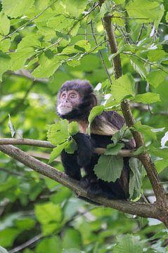 Affe im Baum von