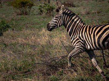 Een Zebra rennend over de vlaktes van Zuid-Afrika van Jordi Woerts