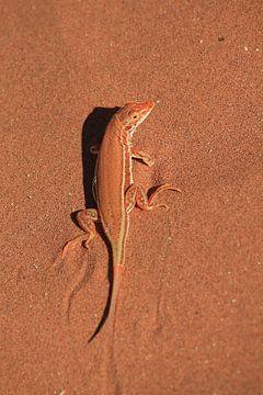 Zauneidechse im roten Wüstensand. von Bobsphotography