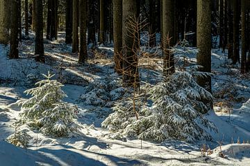 Natur und Landschaft im Erzgebirge von Johnny Flash