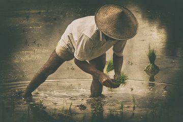 Rijst planten  van Leanne lovink