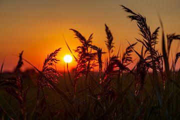 Zonsondergang door het riet bij Dorkwerd van Evert Jan Luchies