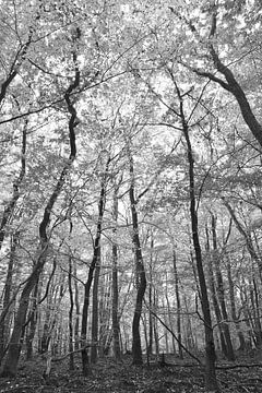Schwarz-weiß nachschlagen von Christa Stroo fotografie